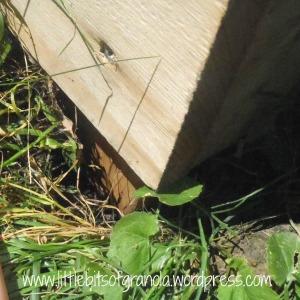 LBoG Raised Garden Post Insert Close