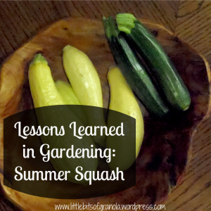 Lessons Learned in Gardening Summer Squash by Little Bits of Granola