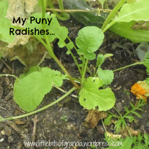 Lessons Learned in Gardening: Summer Squash on Little Bits of Granola