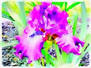 Iris Watercolor